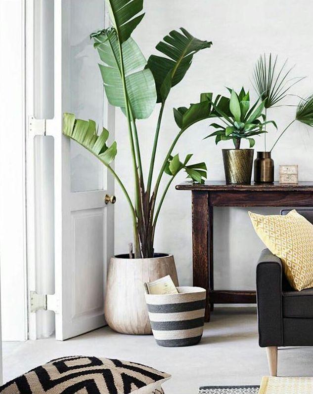 room plants 20 نکته درباره طراحی دکوراسیون منزل