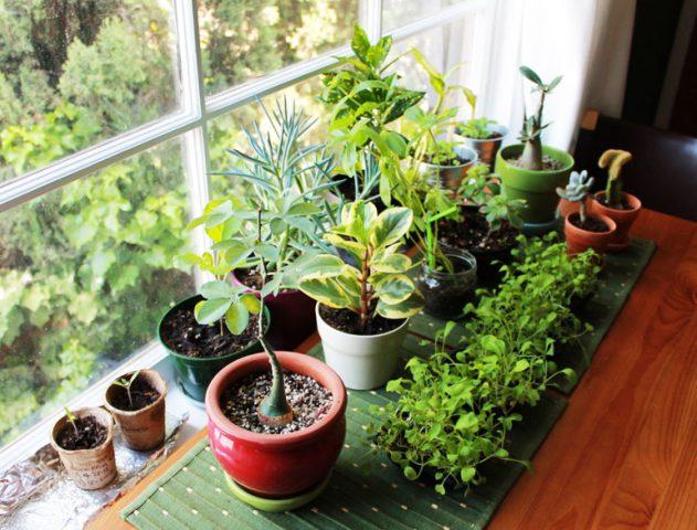 plants in home 3 تاثیر گیاهان در دکوراسیون داخلی منزل