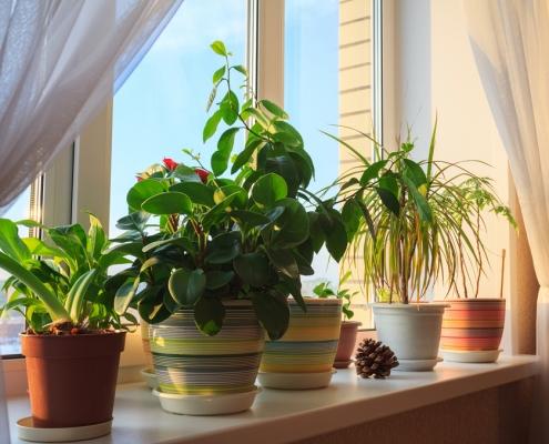 plants in home2 495x400 صفحه اصلی